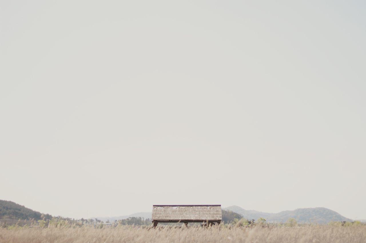 Swamp Reeds 소래포구 습지