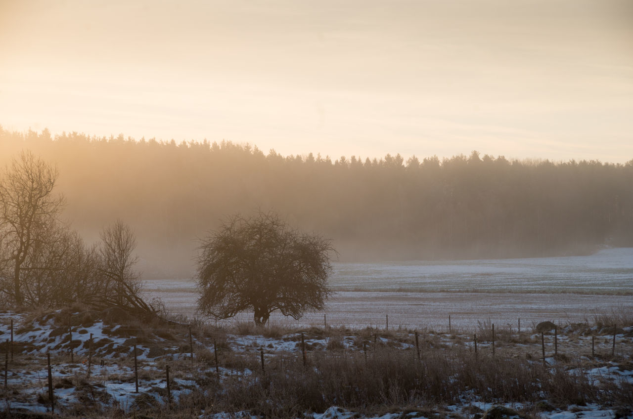 A November morning Beauty Beauty In Nature Cold Temperature Idyllic Landscape Morning Morning Sky Nature No People Outdoors Roslagen Rural Snow Sunrise Sweden Swedish Nature Tranquility Tree Winter