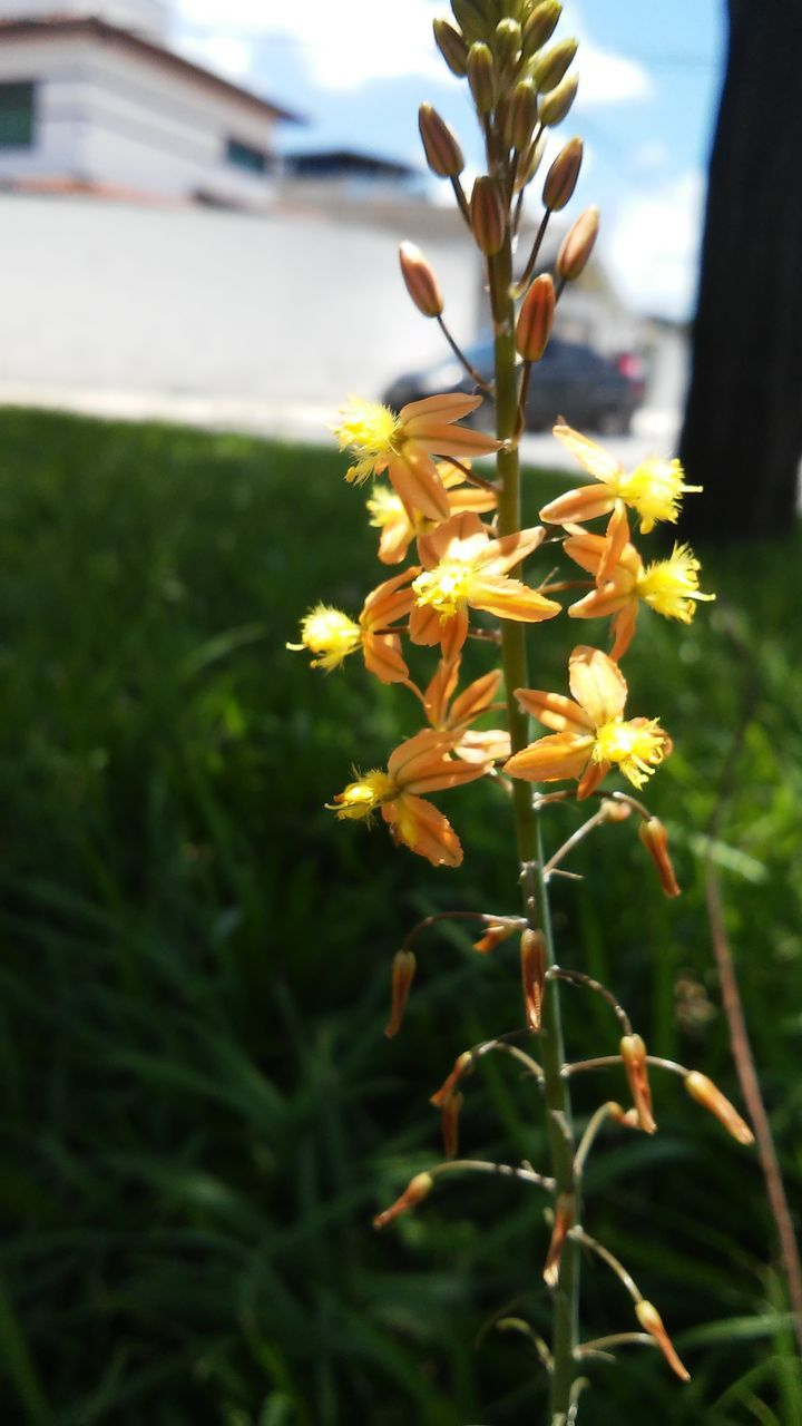 flower, nature, growth, plant, petal, beauty in nature, freshness, fragility, outdoors, flower head, close-up, blooming, yellow, no people, day
