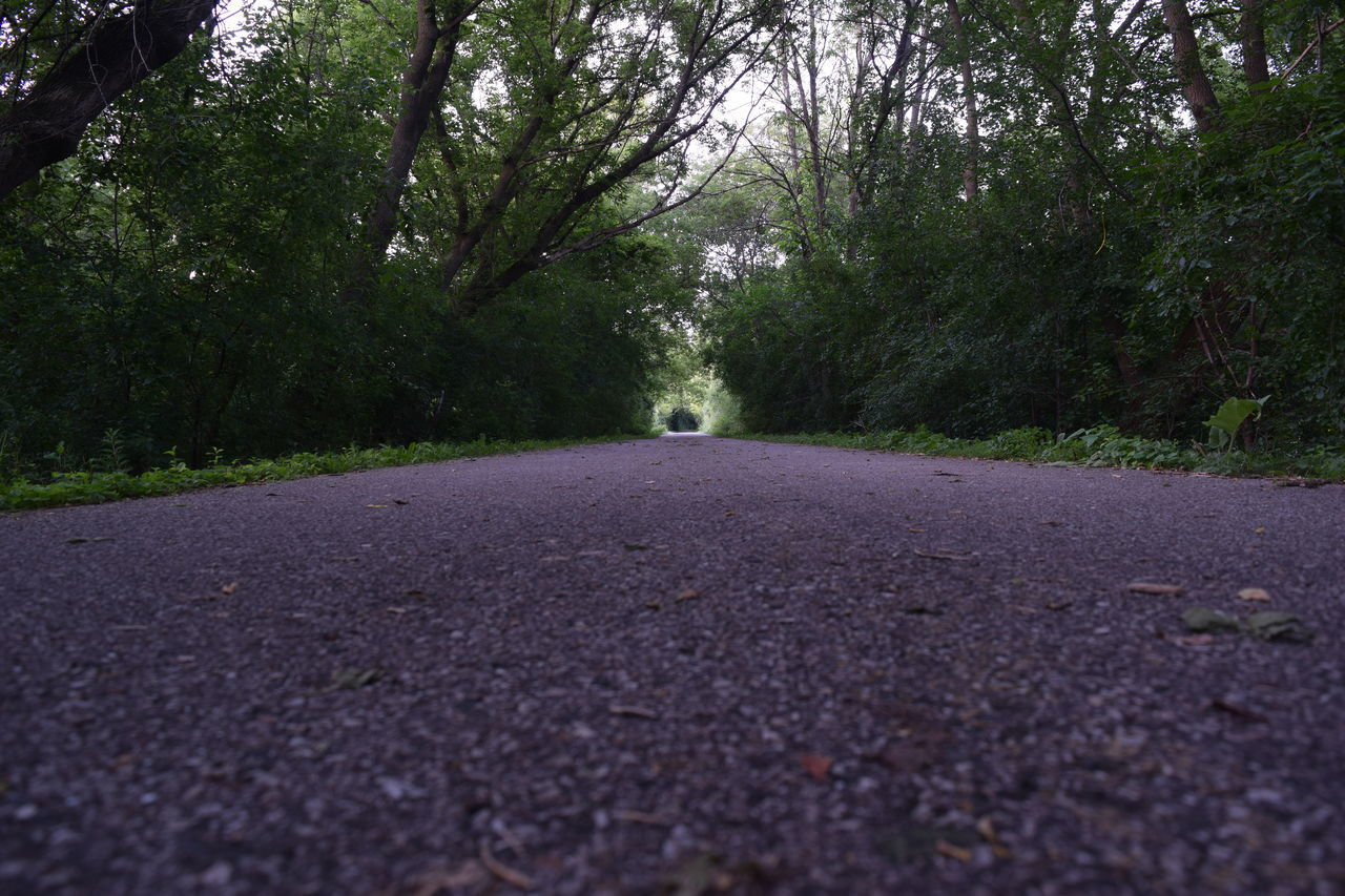 tree, road, the way forward, nature, tranquility, no people, asphalt, outdoors, day, transportation, forest, leaf, beauty in nature