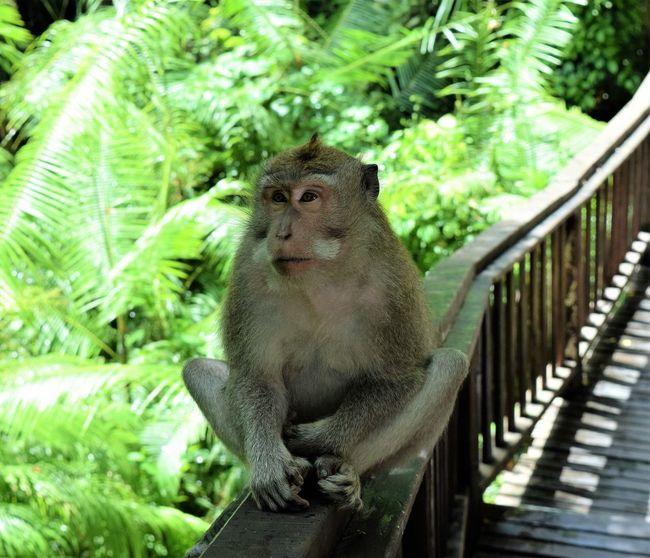 Animal Themes Day Mammal Monkey Monkey Forest Nature One Animal Sacred Places