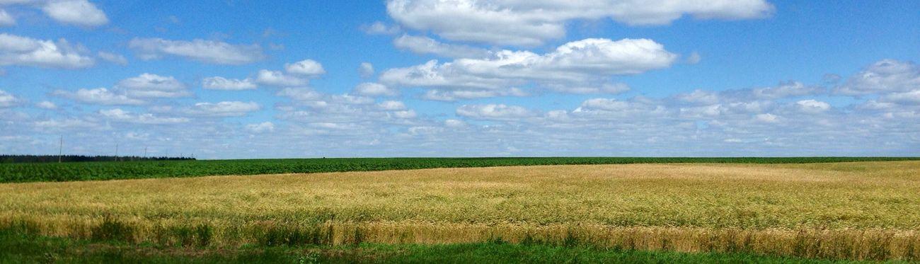 Wheat Field Nature Russia