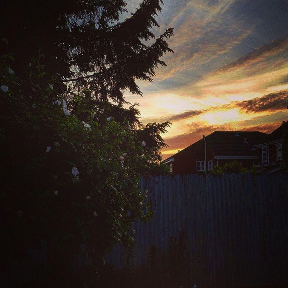 Lush sunset!'✌💕🌅 Loveit Sunny Lush Lushweather Sunshiningthoughclouds Sunset Beautifulday Lushview Orangesky