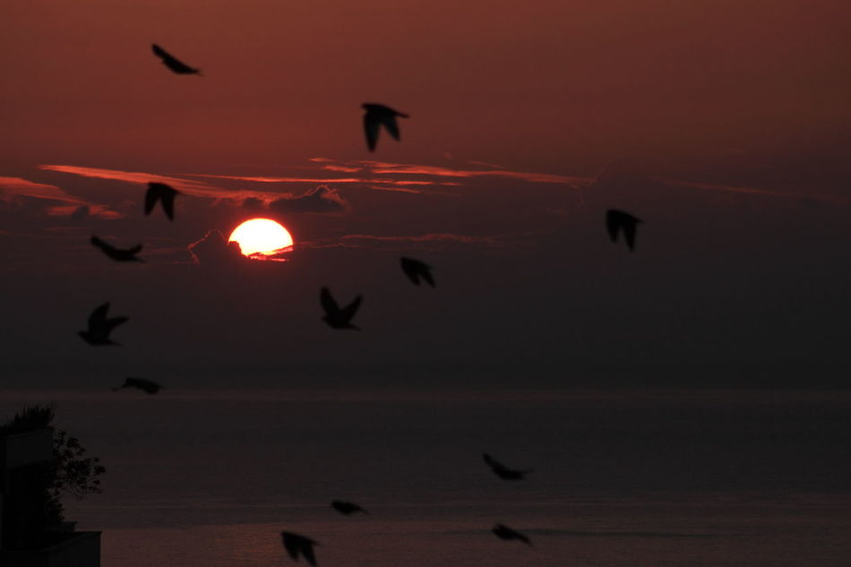 Animal Themes Animal Wildlife Animals In The Wild Beauty In Nature Bird capturing motion Fly Flying Horizontal Monaco Nature No People Outdoors Scenics Sea Silhouette Sky Spread Wings Sun Sunlight Sunset Capturing Emotion Capturing Motion