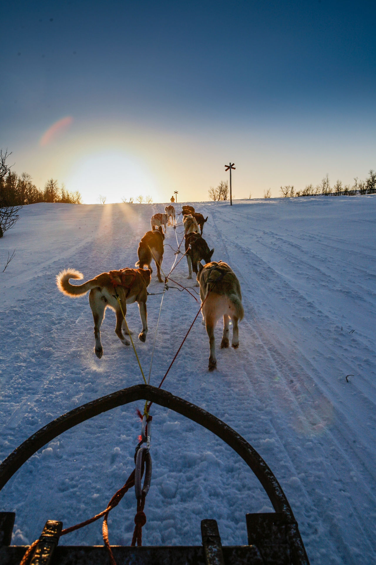 Beautiful stock photos of sweden, Animal Themes, Are, Cold Temperature, Dog