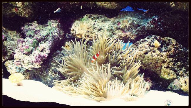 Nemo & Nemone ?