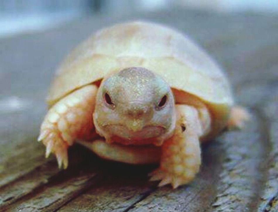 Photo Cute♡ Animals Turtles(: