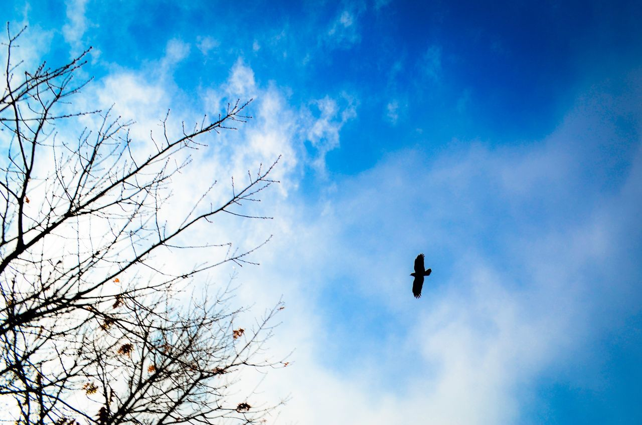 Sky Low Angle View Cloud - Sky Flying Tree Bird Silhouette Outdoors Nature No People Animals In The Wild Animal Themes Beauty In Nature Day Tranquility
