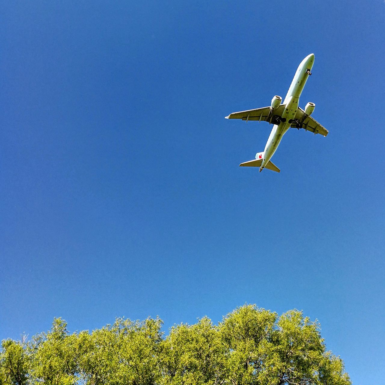 No People Low Angle View Clear Sky Sky Flying Blue Airplane