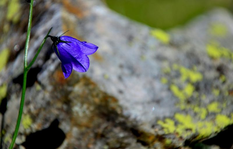 Beauty In Nature Loves_details Pocket_colors Loves_detail Igw_nature Pocket_allnature Loves_nature Beautiful Nature Loves_flowers Violet Flowers Loves_garden Capture The Moment Igw_colors