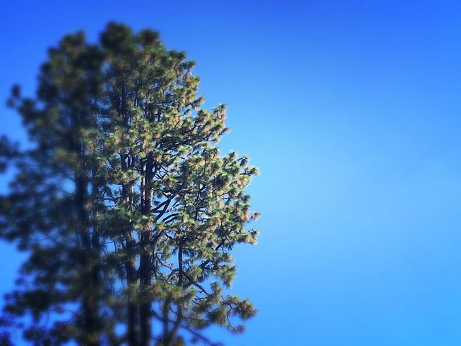 Tree Clear Sky Beauty In Nature Nature Scenics Tranquility Non-urban Scene Tranquil Scene Breathe Yogainspiration