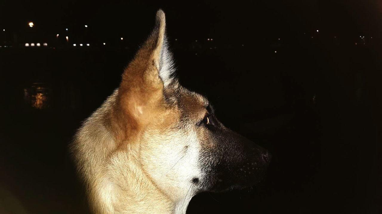 Dog Dogphoto Dog Lover Dog❤ DogLove Dog Photography Dogs Doggy Dogmodel Domestic Animals Dogoftheday Dog Portrait Doglover Pets One Animal Doggy Love