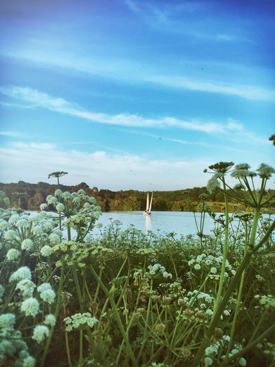 Prettiest Weed Cow Parsley Reflection_collection Opeys Water View Water Reflections Boats And Water Boats Boats And Sky Sailing Sailing Club Boat Masts Fresh On Eyeem  Fresh On Eyeem  Blashford Lakes Hampshire  On The Way Fine Art Photography The Color Of Sport