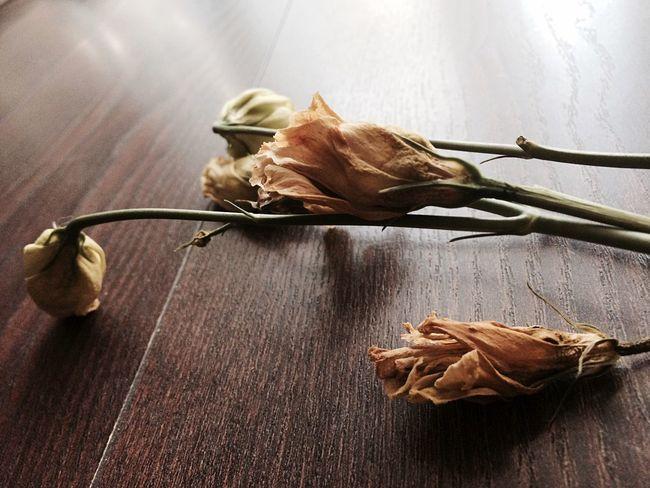 Nature Flower Filter Died Death Life Orange