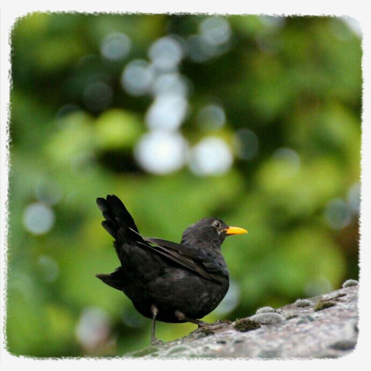 Birds TheMinimals (less Edit Juxt Photography) EyeEm Nature Lover