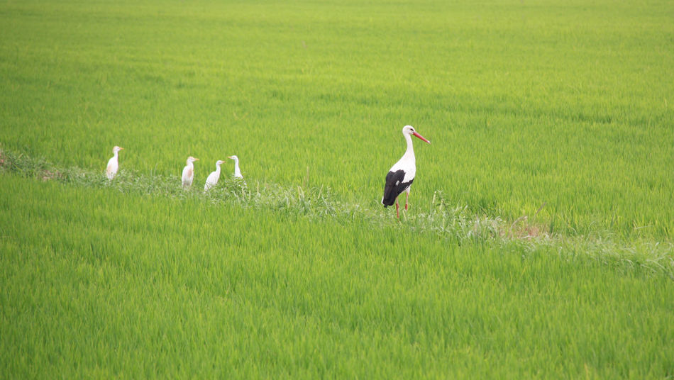 Cicogne fra di noi ... Animal Themes Animal Wildlife Animals In The Wild Beauty In Nature Bird Crane - Bird Day EyeEm Gallery EyeEm Nature Lover Field Grass Green Color Growth Nature No People Outdoors Perching Stork White Stork