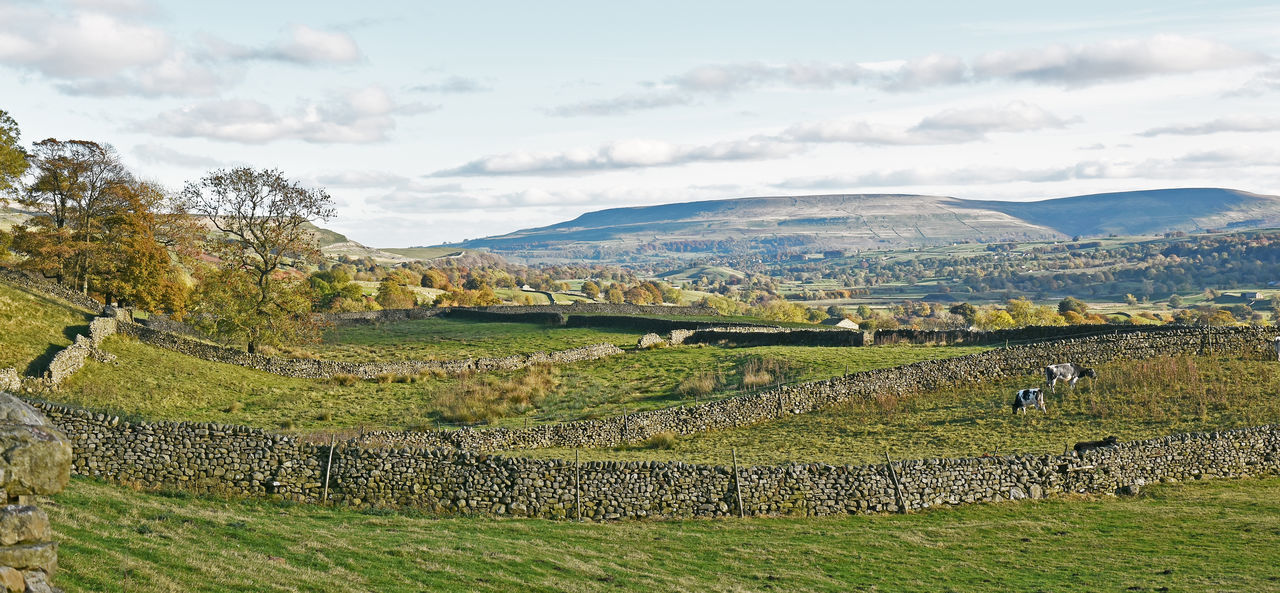 Askrigg Colors Countryside Landscape Leyburn Panoramic Panoramic View Penhill Stone Wall Stone Walls Wensleydale Yorkshire Dales