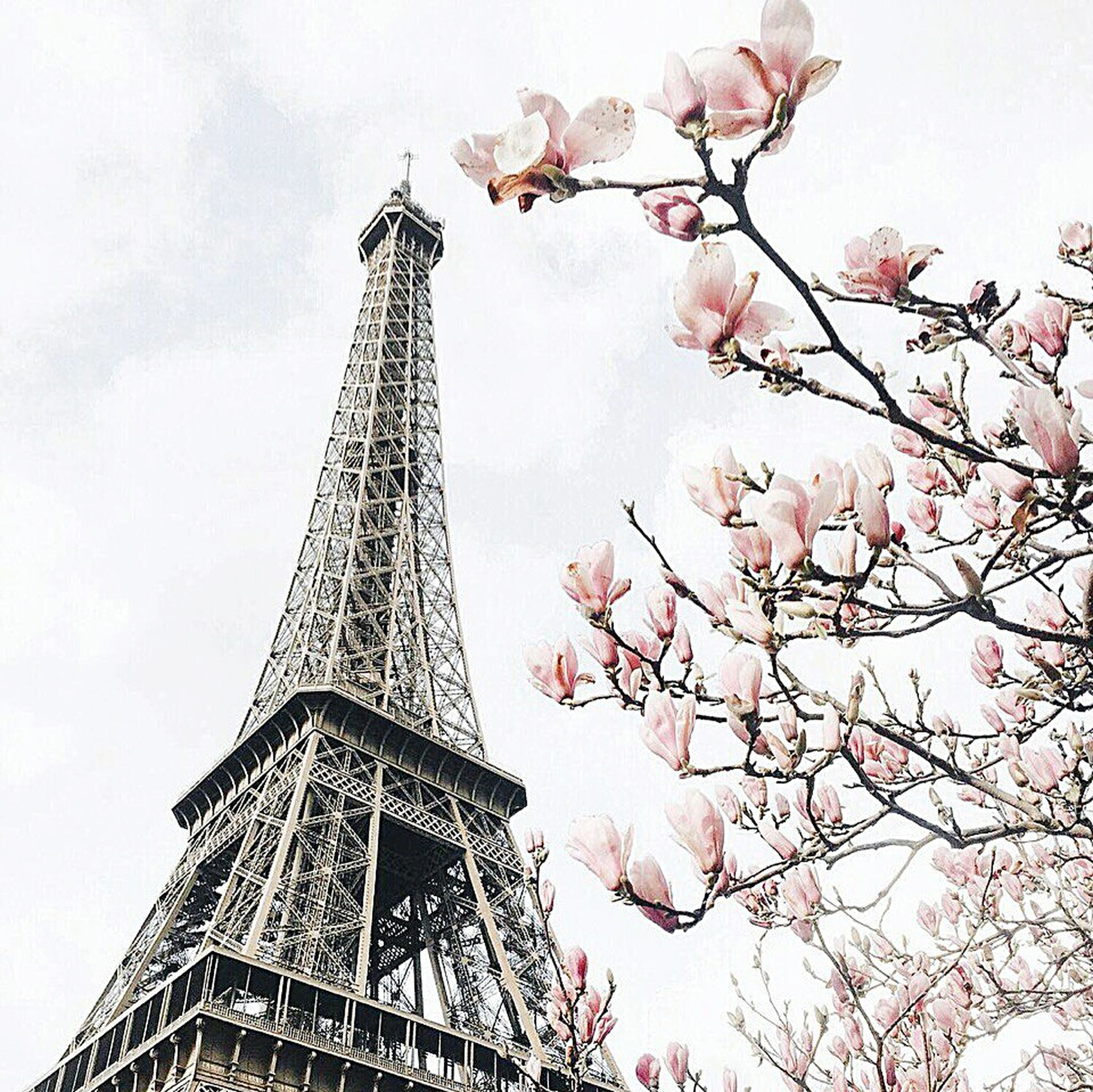 low angle view, architecture, built structure, tower, eiffel tower, tall - high, famous place, international landmark, travel destinations, tree, building exterior, tourism, capital cities, sky, culture, travel, history, city, branch, architectural feature