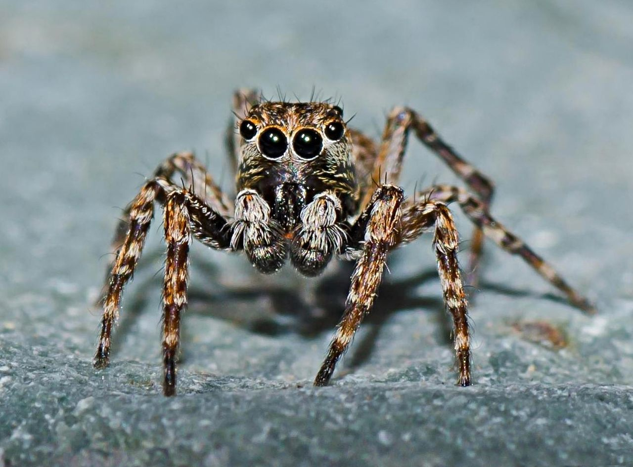 Beautiful stock photos of spider's, Alertness, Animal Body Part, Animal Eye, Animal Leg