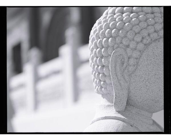Close-up Focus On Foreground No People Day Outdoors Old-fashioned Losangeles Fujifilm Los Angeles, California Beauty In Nature Buddha Buddah Head BUDDHISM IS LOVE Rose Hills Memorial Neopan400 Whittier Mamiya Rz67 Mamiya Buddhist Temple Buddha Statue California Buddhist Buddhism
