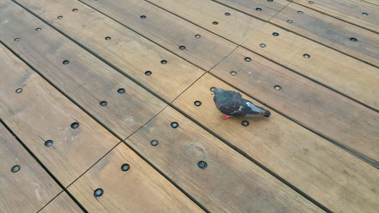 All Alone Alone Single Pigeon Bird Backgrounds Pattern Boards Bolts Rivets Wood Walkway Pier Copy Space Interruption Connectedness Minimalism Meditation Rewilding Freedom Peaceful Serene Tranquility Nirvana