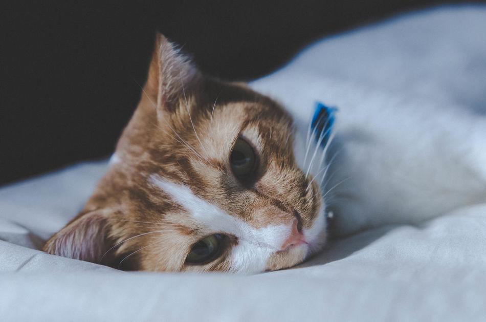 Sigma Art 18-35mm 1.8 D7000 Indoors  Pets Domestic Cat Close-up