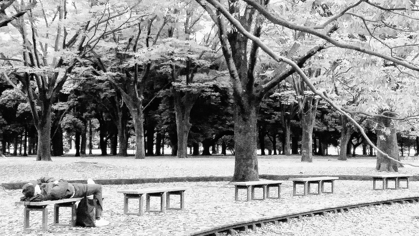 Beside the lake, beneath the Trees Forty Winks Bench Yoyogi Park Nature Peace And Quiet Naturephotography Naturecollection Tokyonature Urbannature Yoyogiautumn2015 Tokyoautumn2015 Enjoying Autumn Fall 秋 Tokyo Japan Travelphotography Streetphotography Bnw_collection Bnw_captures Bnwphotography Bnw_tokyo Bnw_world Nov2015