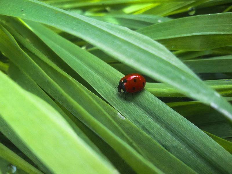 Ladybug😊😊🐞🐞🐞 Grass Green Picoftheday Mothernature Nature Natureporn Beauty In Nature