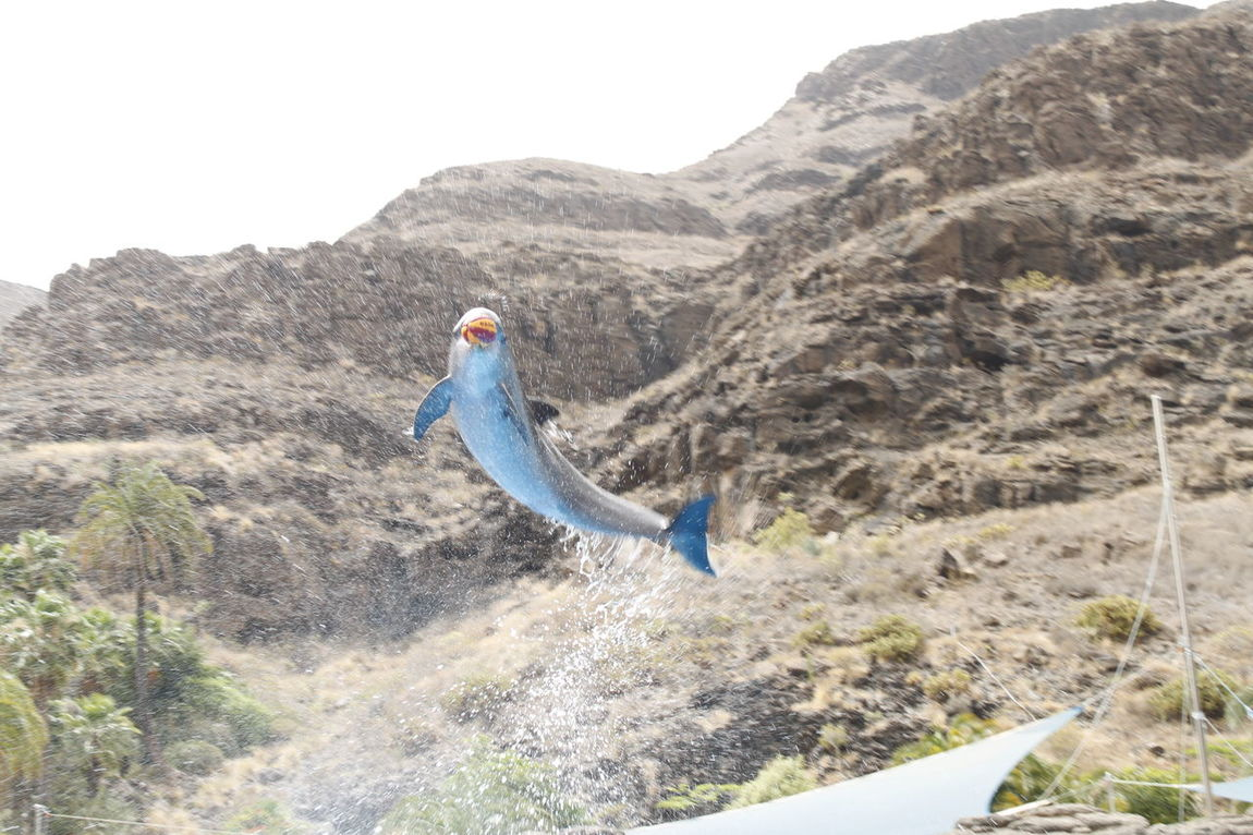 Beautiful Birds Colours Delfin Dreams Jump Monkey Water