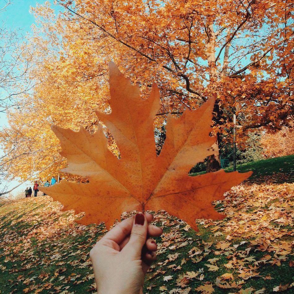 Beautiful stock photos of ankara, Autumn, Change, Cropped, Day