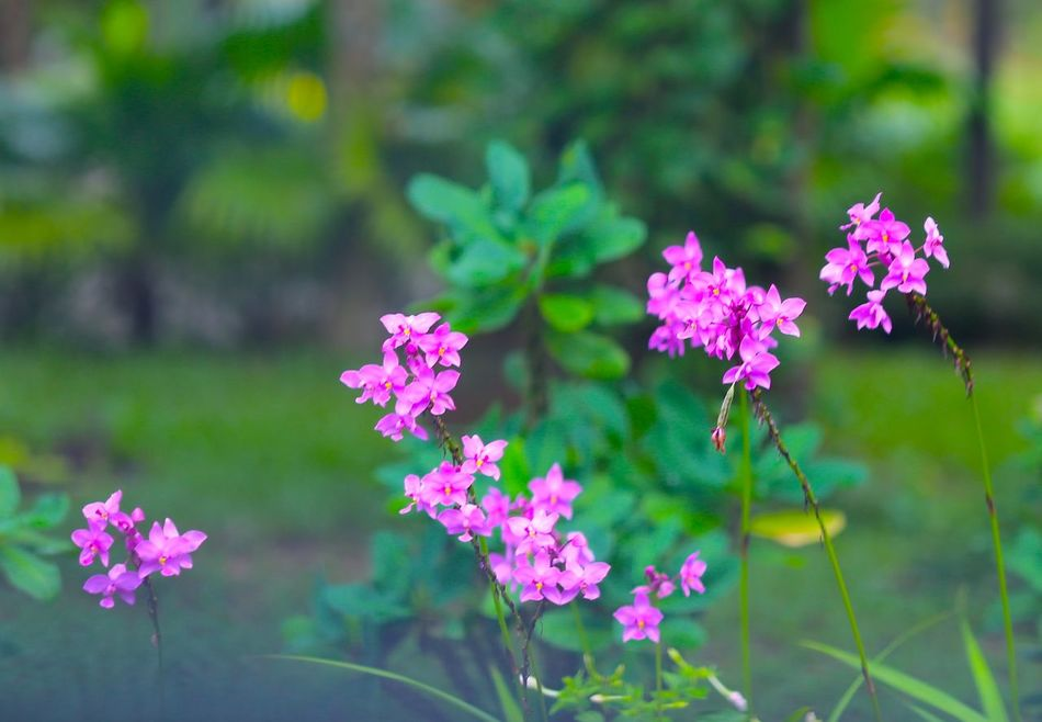 Beauty In Nature Millennial Pink Nature Pink Color Pink Flower