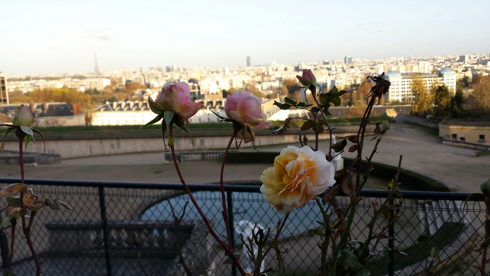 Rose D'automne Autumn Colors Tour Eiffel Paris