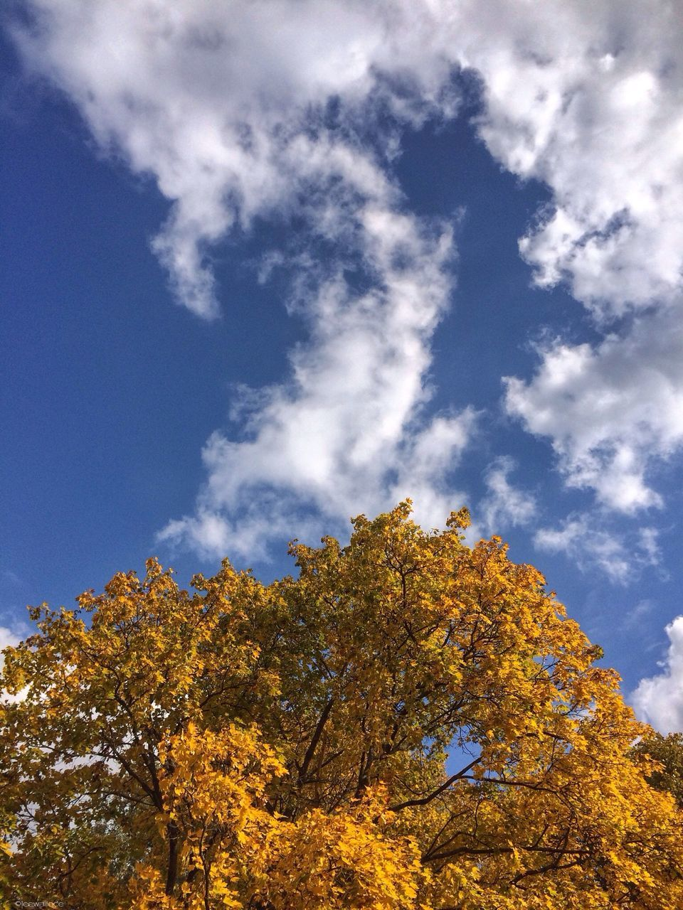 low angle view, autumn, tree, sky, nature, beauty in nature, growth, cloud - sky, day, change, tranquility, outdoors, no people, leaf, blue, scenics, branch