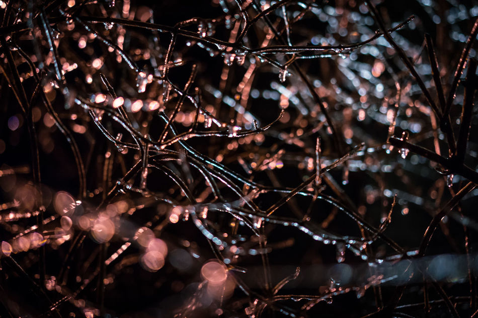 Icy rain on the branches of tree - night scene with DOF and street light ambient Ambient Beauty In Nature Blizzard Blurred Branch Branches Climate Depth Of Field Detail Dof Forecast Fragility Freezing Rain Freshness Growth Ice Icy Icy Rain Nature Nature Spring Street Lights Tree Weather Winter