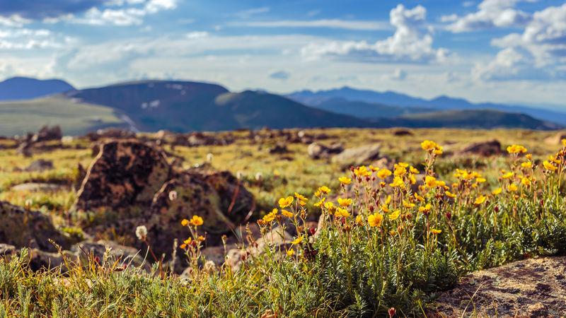 Beauty In Nature Cloud - Sky Colorado Flower Horizon Over Land Landscape Mountain Mountain Range No People Non-urban Scene Outdoors Rocky Mountain National Park Scenics Sky Summer Tundra Communities Trail Yellow