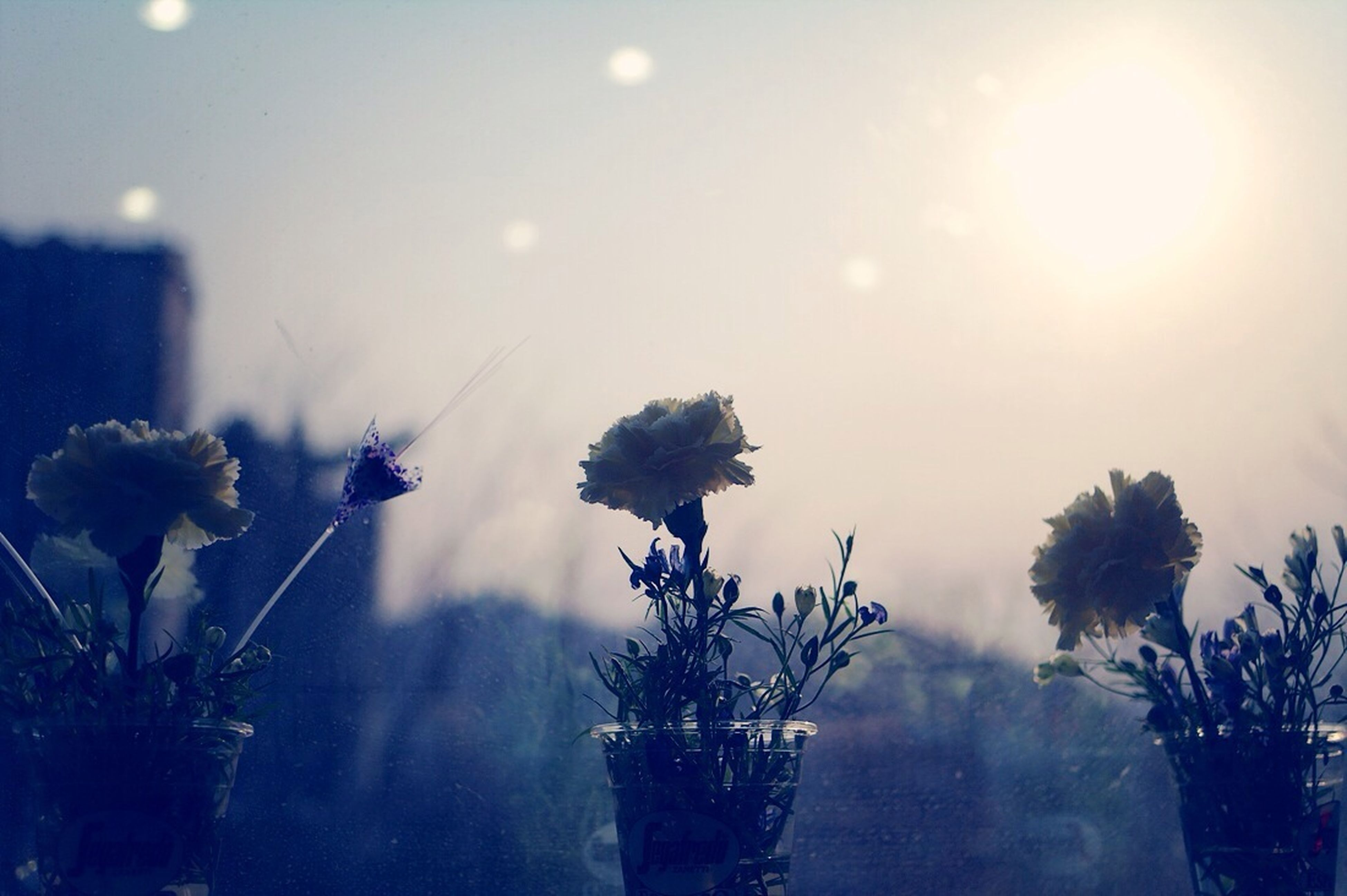 sun, flower, growth, lens flare, plant, fragility, sunbeam, freshness, focus on foreground, sunlight, nature, beauty in nature, sky, stem, close-up, no people, day, outdoors, bright, tree
