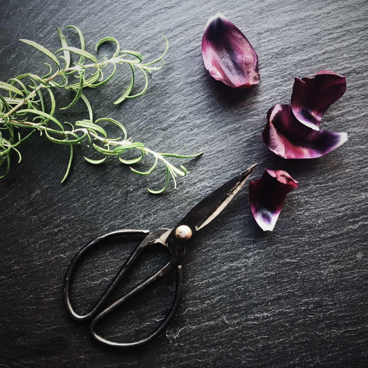 Close-up Plant Table Leaf Still Life Food And Drink Darkbackground Studio Shot Kitchen Foodstyling