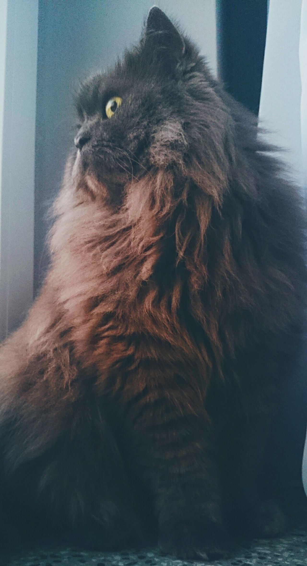 One Animal Pets Day Models Morning Light Cat Cat Lovers Cats Of EyeEm Cat Watching Catstagram Catlovers Catch The Moment Cat♡ Cats 🐱 Friendship Friends ❤ Friends Pet Love Sky And Clouds Close-up Animals In The Wild Anmial Lovecats Love❤ 😻my Sweety Cat😻