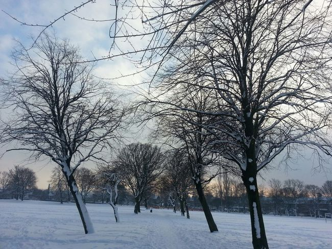 Vanishing Point Snow Day Bradford Nature Trees Snow Covered Bd3