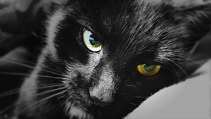 Cat Pets Cats Of EyeEm Photooftheday Moneyshot Wallpaper One Animal Animal Body Part Domestic Cat Eye Animal Head  Animal Portrait Feline Animal Themes Domestic Animals Looking At Camera Close-up Mammal No People Indoors  Leopard Space Nature Day