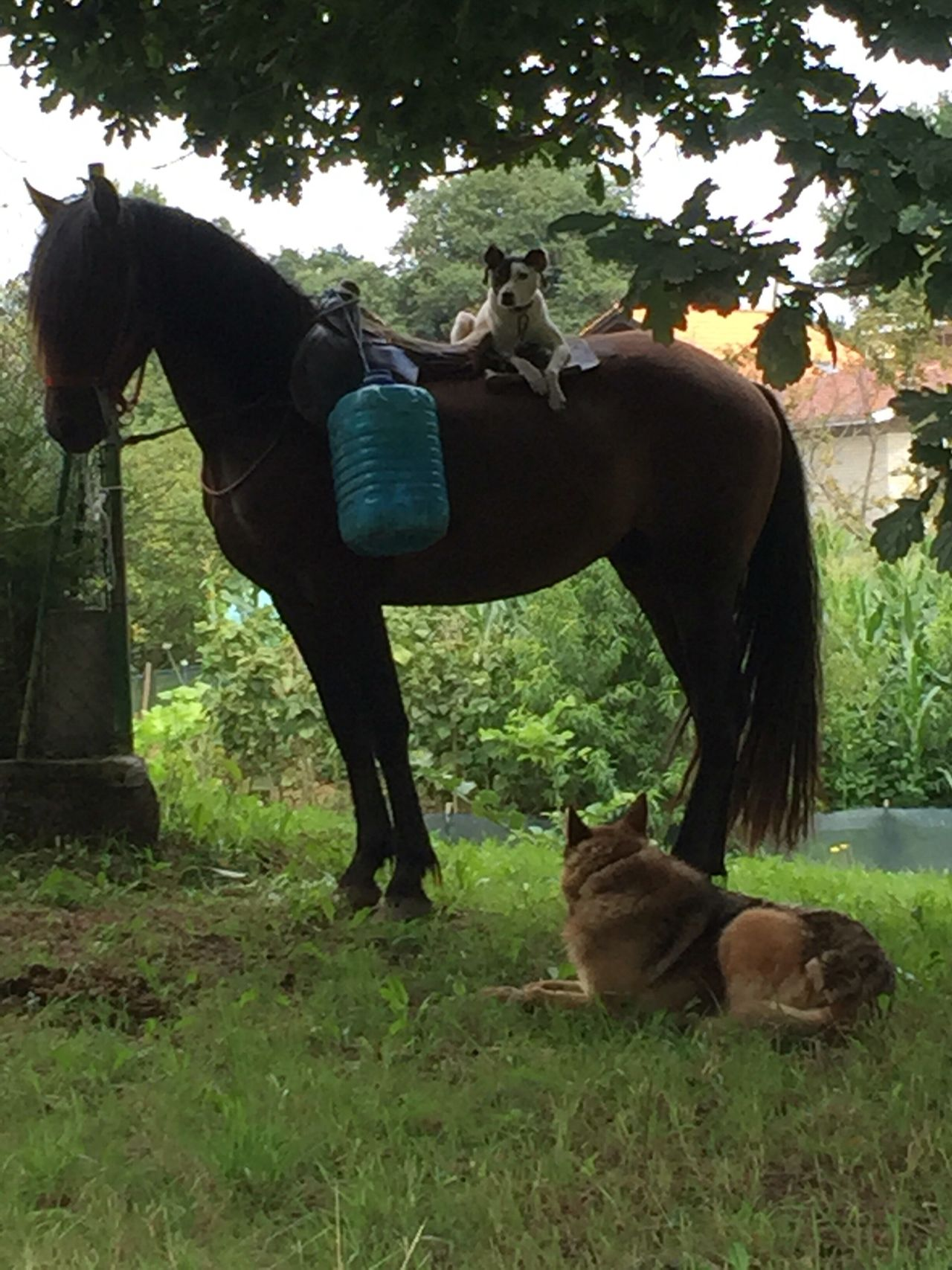 Mieres Asturias España SPAIN Horse Dog Animals Amazing Beautiful Good Morning Relaxing Traveling Tranquility Farm IPhoneography Iphone6