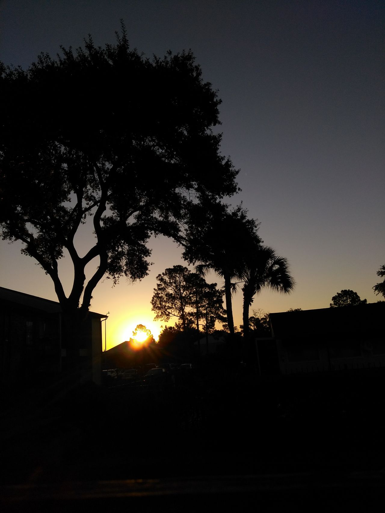 Peek a boo! Silhouette Tree Sunset No People Sky Night Outdoors Nature Beauty In Nature City Pixelated The Great Outdoors - 2017 EyeEm Awards The Street Photographer - 2017 EyeEm Awards Nature Beautiful Tree Silhouette Texas Photooftheday Myview EyeEm Best Shots Funinthesun  Cloud - Sky Eyeemcollection City