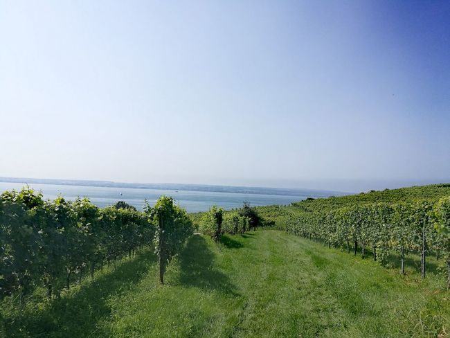 Sea No People Outdoors Day Green Color Grass Horizon Over Water Nature Water Beach Beauty In Nature Sky Nature Tranquility EyeEm Selects EyeEm Nature Lover Wein Weinberg Bodenseebilder Bodensee EyeEm Best Shots