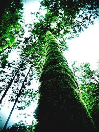 Ein Baum Nature_collection EyeEm Nature Lover