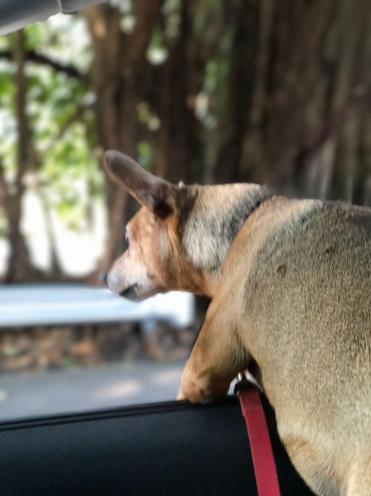 Curious One Animal Animal Themes Outdoors Doggy Love Eyeemdoglover PortraitPhotography portraitofadog Goingforaride