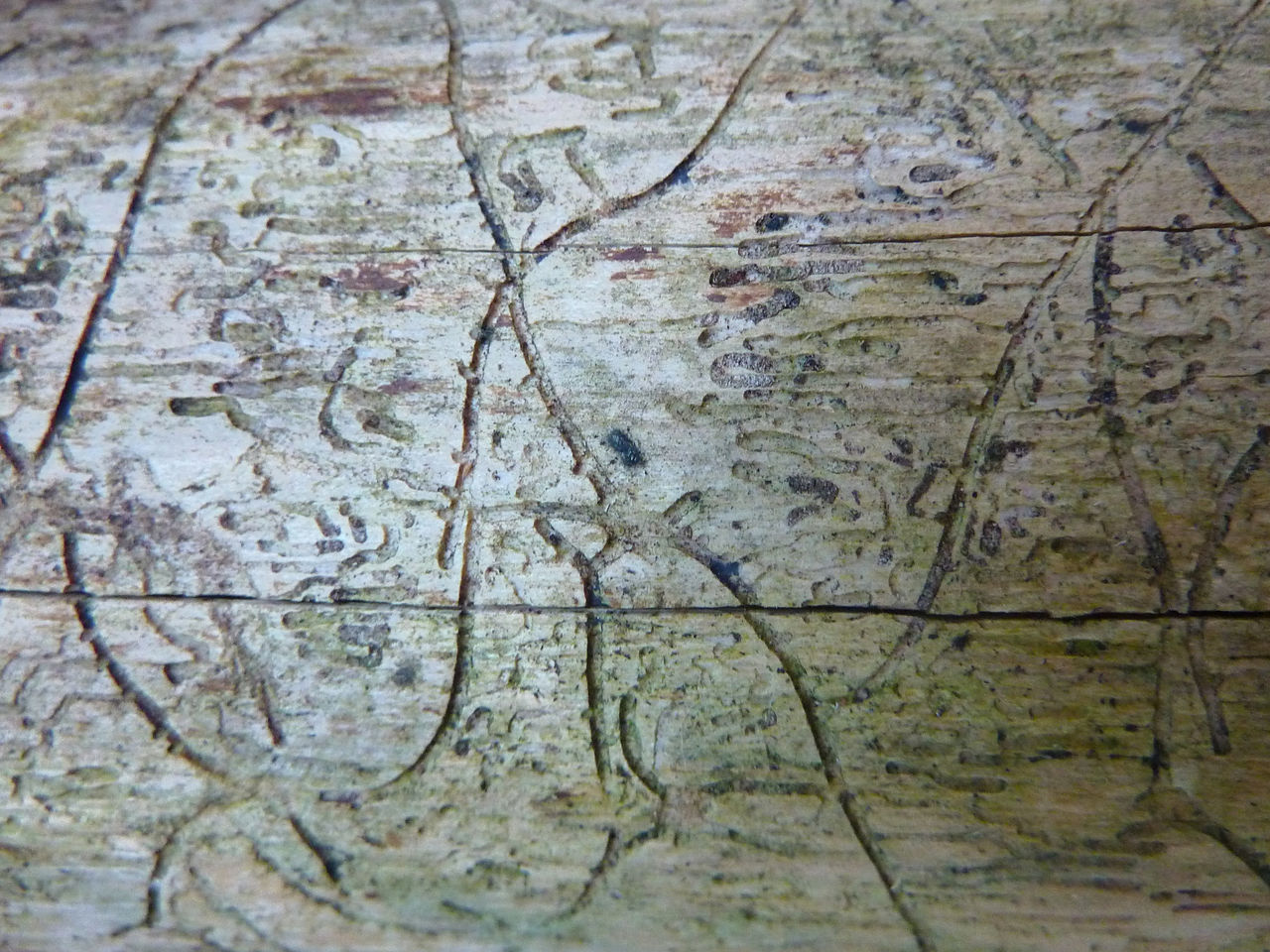Backgrounds Close-up Cracked Day Full Frame Nature No People Outdoors Pattern Textured  Traces Tree Weathered Wood