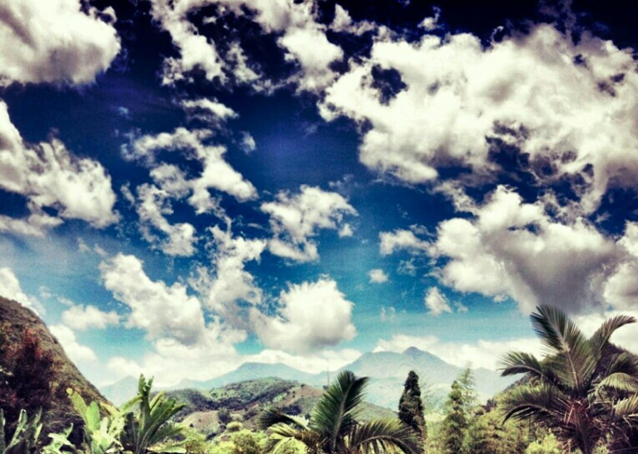 sky, nature, beauty in nature, scenics, tranquility, no people, cloud - sky, tranquil scene, day, blue, low angle view, outdoors, tree, palm tree