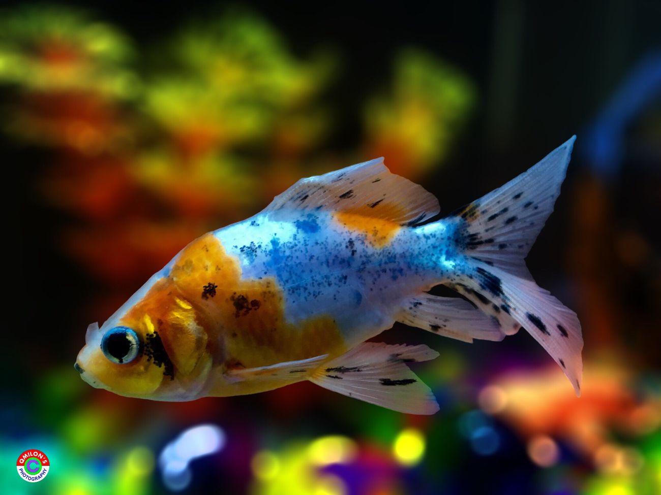 Fish aquarium in bangladesh - Fish Aquarium Taking Photos Enjoying Nature Nature Eyeem Nature Lover Aquariumfish Aquarium Beauty Aquarium Photography Eyeem