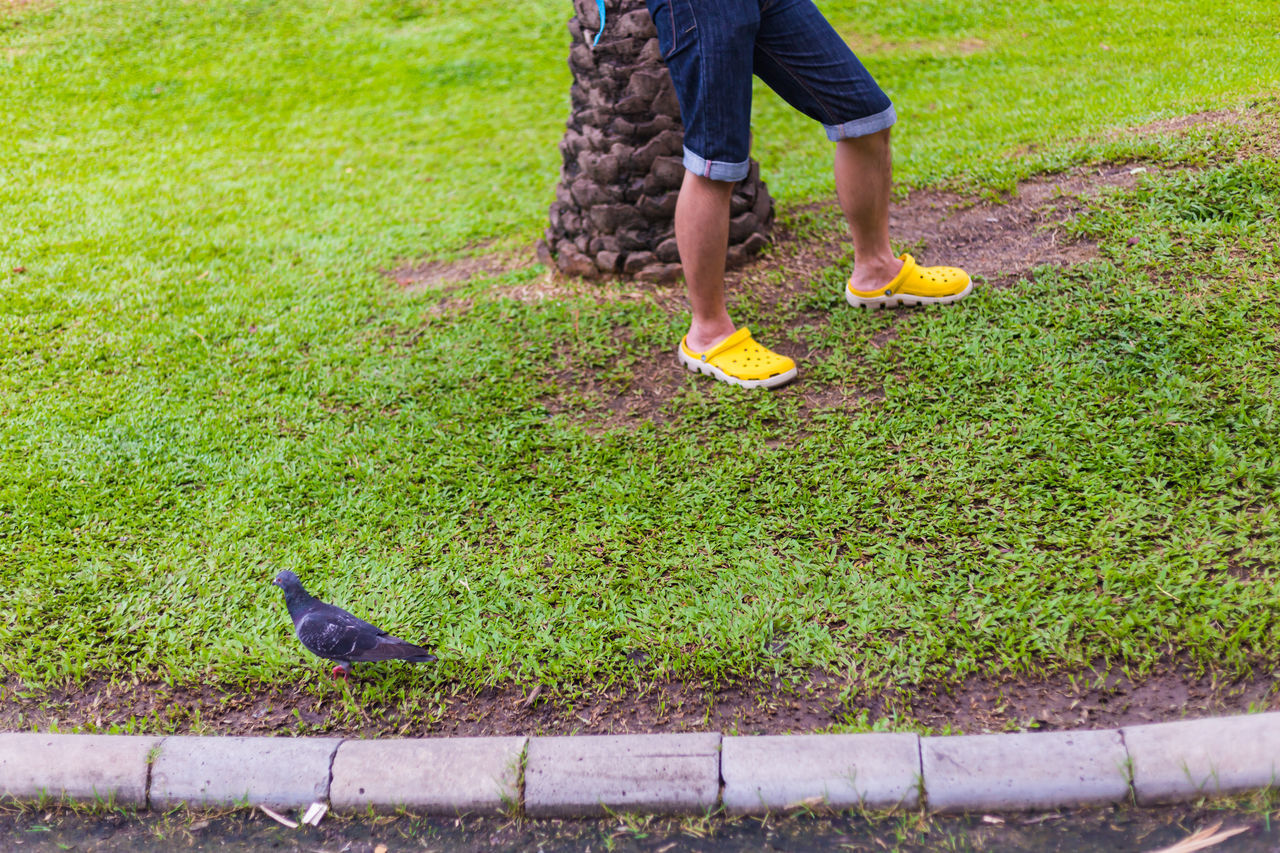 Bird Casual Clothing Day Field Freshness Grass Grassy Green Green Color Growth Low Section Outdoors Park Person Street Streetphotography Walking Street Photography Jatujak Park Frame
