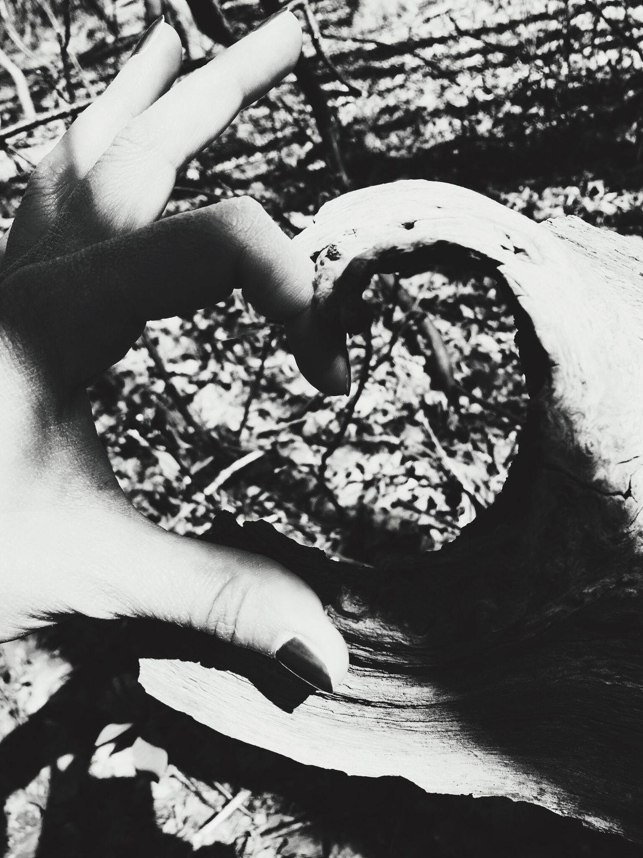 Blackandwhite Sandpoort Nature Love